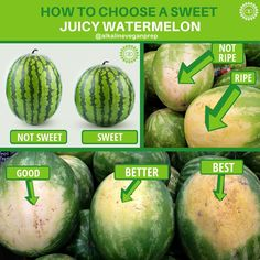 Why Organic Vegetable Seeds Very Important? Watermelon Ripeness, Fruit Recipes, Vegan Recipes, Cooking Tips, Cooking Recipes, Sweet Watermelon, How To Choose Watermelon, Watermelon Hacks, Food Facts