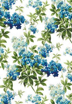 Phlox Hand-painted paper design, 1900 Summer 2014