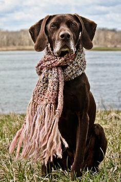 high five - german shorthaired pointer pup Love My Dog, Beautiful Dogs, Animals Beautiful, Cute Animals, Baby Dogs, Dogs And Puppies, Doggies, Corgi Puppies, German Shorthaired Pointer