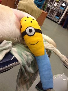 Be prepared ... if your pet comes in for a surgical procedure and requires a bandage, you just may end up bringing home a Minion bandage wrap