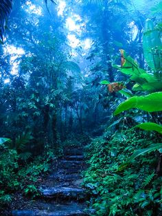 Rainforest Hike, Arenal Volcano, Costa Rica It almost looks trippy, like black light almost. Cool. I like