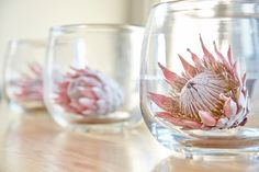 Proteas in Glass Vases Wedding Table Decorations, Wedding Themes, Flower Decorations, Wedding Centerpieces, Wedding Cards, Wedding Ideas, Wedding Planning, Flor Protea, Protea Flower