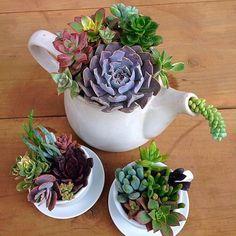 Creative ideas to decorate home with succulent Tropical Plants Succulent Bowls, Succulent Centerpieces, Succulent Gardening, Succulent Arrangements, Succulents In Containers, Cacti And Succulents, Planting Succulents, Cactus Plants, Cactus Terrarium