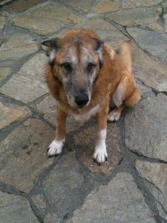 einer unserer ersten Hunde - er war vom Tierheim Lengau/Lochen
