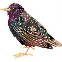 Starling by Lara Paulussen