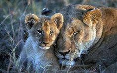 Adorable how much the mother loves her cub. Pinned from a Twitter account. PROTECT ALL WILDLIFE ‏@Protect_Wldlife December 9 2015