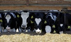 Methane Emissions Are On The Rise. That's A Big Problem.