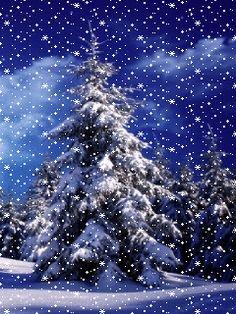 Christmas Tree Gif, Winter Christmas Scenes, Christmas Scenery, Winter Scenery, Christmas Animals, Winter Images, Winter Pictures, Christmas Pictures, Gif Noel
