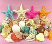 020856 conchas concha Natural aquário decorações estrela do mar plataforma dom artigos de decoração fotografia adereços(China (Mainland))