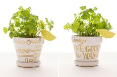 Transform a ceramic pot with gold paint to create your own parsley planter.