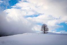 Seul - Arbre sur une colline en descendant au Val de Travers dans le Jura Suisse.