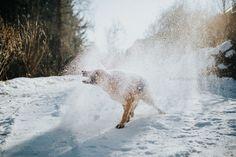 dog in snow   dog photography   pet photography   bernadetteburnett.com