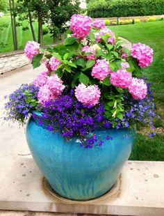 「summer planting」の画像検索結果