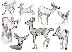 ...And allow you to refine your drawings into believable animals.