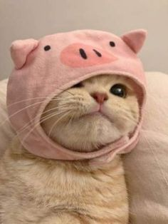 Cute Baby Cats, Cute Cats And Kittens, Cute Little Animals, Cute Funny Animals, Kittens Cutest, Cute Animal Photos, Funny Animal Pictures, Gatos Cool, Image Chat