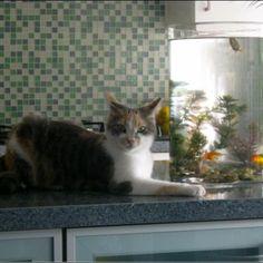 Annick Morel met Naya - chillen in de keuken