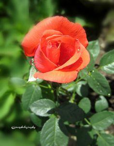 Lena Novak for #RosesOpenWeekend