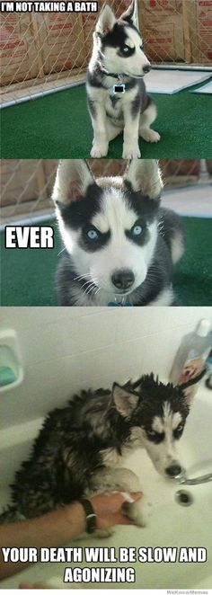 I don't like dogs and this one scares me to death but I love the pic on the end...makes me :)