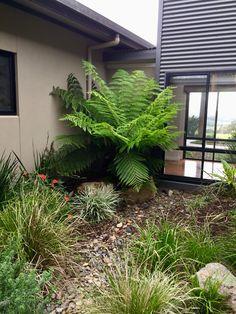 Gloucester Nsw, Barrington Tops, Acre, Australia, Luxury, Plants, Ideas, Mornings, Plant