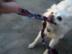 Make a tug toy for your dog!