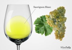 http://winefolly.com/wp-content/uploads/2013/06/Sauvignon-blanc-wine-and-grapes-770x537.jpg