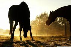 Backlit Horses Duesseldorf…