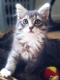 My sisters kitty is so cute..