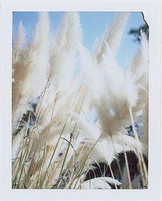 Spring Blossom | Paper Massimo Dutti