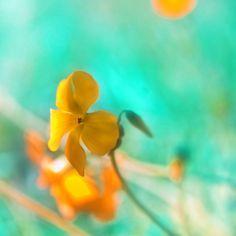 yellow and aqua