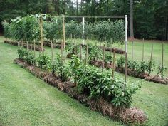 Straw Bale Gardening 101 - I did this in NC and it worked really well. Yo must…