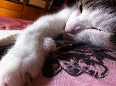 Ricomincio da Me My Secret Garden.: Ai gatti riesce senza fatica ciò che resta negato ...