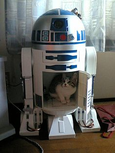 STAR WARS + CATS = BEST THING EVER. That's all I really need to say – I mean – what else do you need in your life today other than random pictures of how Cats made Star Wars bette… Star Wars Film, Crazy Cat Lady, Crazy Cats, Silly Cats, Funny Cats, Funny Animals, Cute Animals, Animal Funnies, The Force Is Strong
