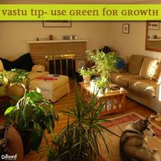 Vastu tip! Green is a very good color for growth.  It symbolizes growth potential and is soothing to the eyes. Use natural or artificial plants inside the house. Also, gardens are considered very good for growth.