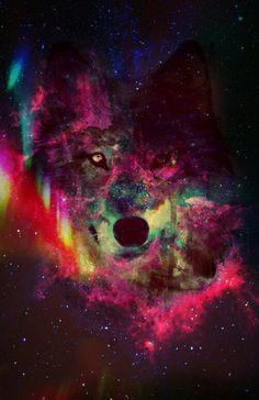 Hintergrundbild#wolf#HipsterWallpaper#Himmel