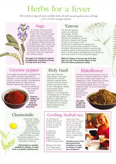 Herbs for a fever