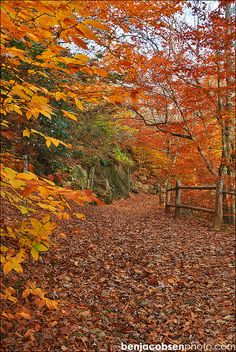 Hopyard State park in East Haddam CT...hiking thru this  in October to Devils Falls to have engagement pics taken