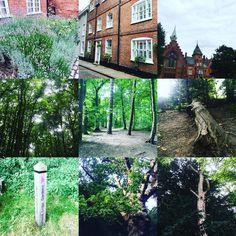 Lots of pretty sights while Pokemon hunting today.  #Nottingham #woods #trees #Notts #PokemonGO