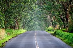 308 Best All Things Kauai Images Hawaii Travel Beautiful Places