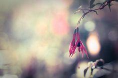 Beautiful flower photography from  harold.lloyd