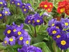 Flowers Beautiful Flowers, Seasons, Plants, Trelleborg, Seasons Of The Year, Plant, Planets