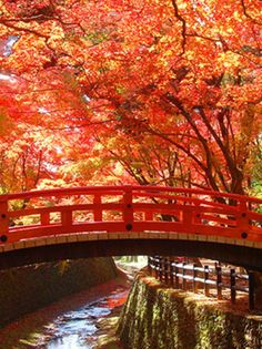 Red bridge in the fall 北野天満宮|きょうとあす. Autumn Scenery, Kyoto Japan, Great View, Japan Travel, Autumn Leaves, Travel Inspiration, Places To Go, Around The Worlds, Japanese
