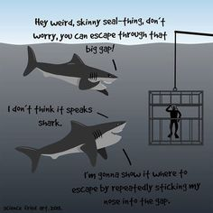 Nice guy is tired of all the sharks out there Album on Imgur