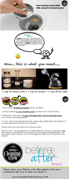 How to get rid of fruit flies!