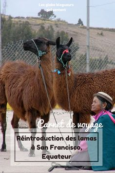 Découverte de la communauté de San Francisco de Cunuguachay et son projet de réintroduction de lamas