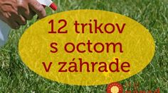 12 úžasných využití octu v záhrade, o ktorých ste zrejme ešte nepočuli. Picnic Blanket, Outdoor Blanket, Planting Vegetables, Garden Boxes, Beautiful Gardens, Garden Plants, Gardening Tips, Outdoor Gardens, Diy And Crafts