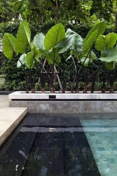 Tropical home design with mini pool (26)