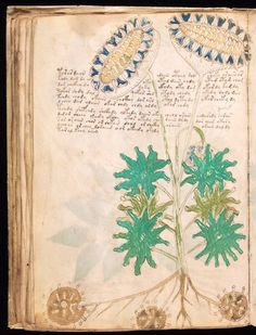 Illustrated pages from the Voynich Manuscript, c. 15th century. Beinecke Rare Book and Manuscript Library, Yale University