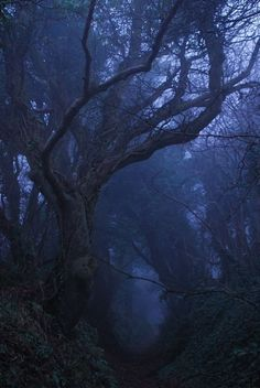 Ethereal Photography :: Isle of Wight based artist and photographer Syd Buron Nature Aesthetic, Blue Aesthetic, Mystical Forest, Château Fort, Blue Forest, Dark Photography, Ethereal Photography, Fantasy Landscape, Mists