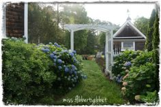 my home, gardening, outdoor living, The azalea border in bloom That is the back side of the potting shed
