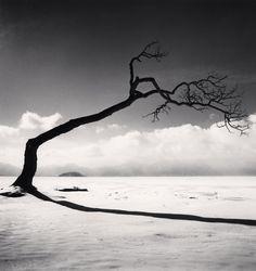 Michael Kenna, Kussharo Lake Tree, Study 10, Kotan, Hokkaido, Japan